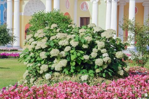 Камеронова галерея Пушкин свадьба (2)