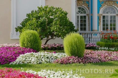Камеронова галерея Пушкин свадьба (4)
