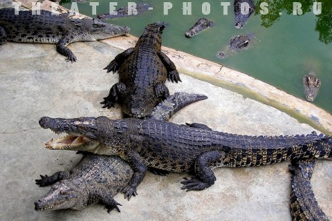 крокодилы в перемешку