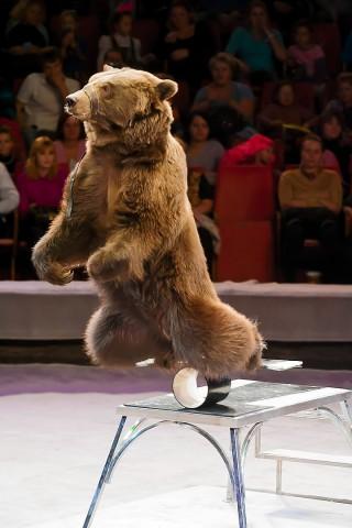 цирковой медведь