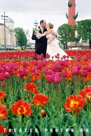 молодожёны в тюльпанах
