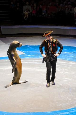 тюлень в цирке