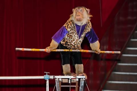 обезьяна в цирке